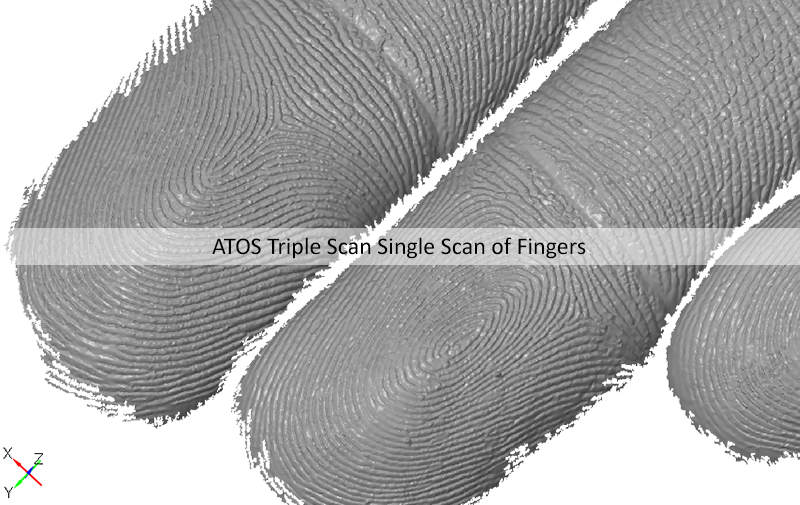 ATOS Triple Scan 3d scanning data of human fingers