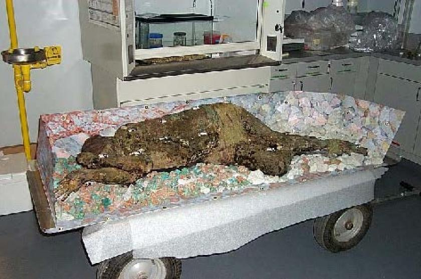 Medical Research for Recreation of a Famous Chilean Mummy